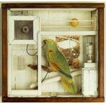 A shadow box by Joseph Cornell.